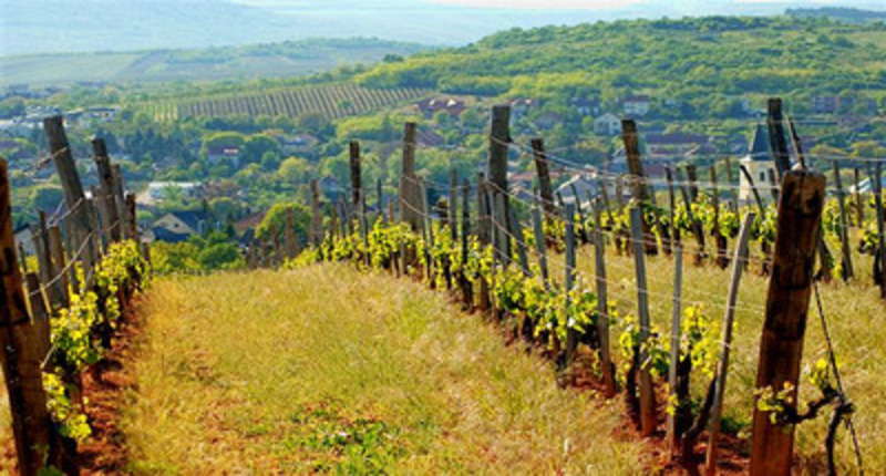 Hungary Tokaj wine tour, Northern Hungary UNESCO site